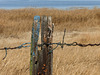 Fence post with a difference