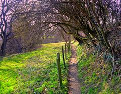 Hunt Path  HFF