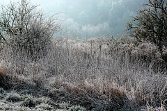 Frost - Frostiness