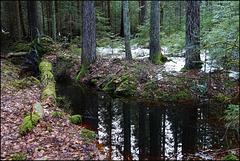 Dark Secret in the Black Forest
