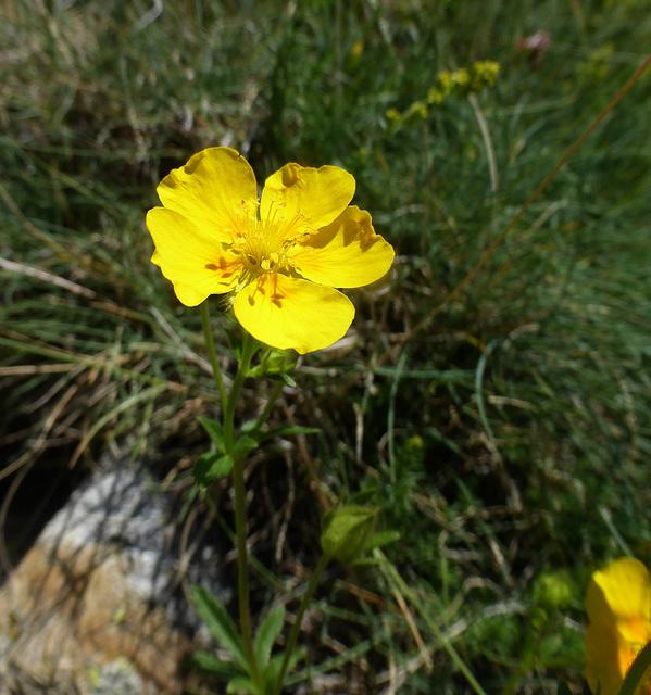 fiori a 1900 metri