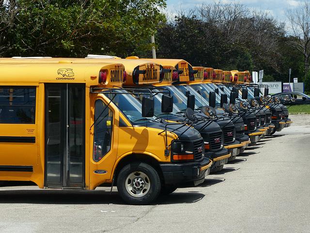 School Buses in Etobicoke (1) - 24 June 2017
