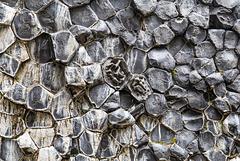 Basalt (2xPiP)