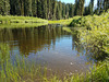 Duck Soup Pond
