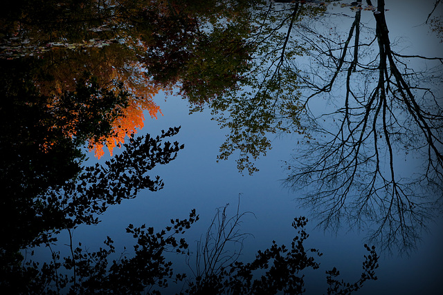 Autumn Flame Reflected