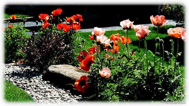 Pour fleurir votre semaine !