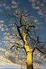 1 (38)..austria herbst autumn tree baum