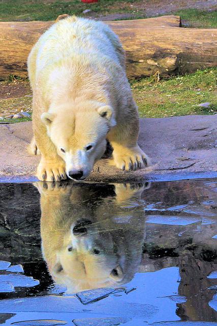 Ein Besuch im Zoo...