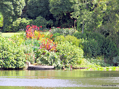 Lake at Hamilton Gardens.
