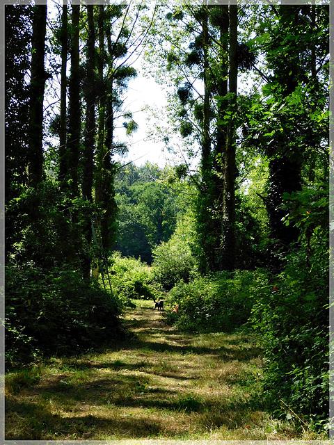 Au bois de Pleumagat en Pleslin Trigavou (Bretagne)