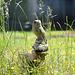 EOS 6D Peter Harriman 12 00 06 9081 GardenLife dpp