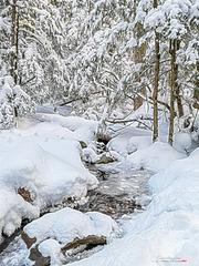 Féérie des neiges IMG 154230(s)