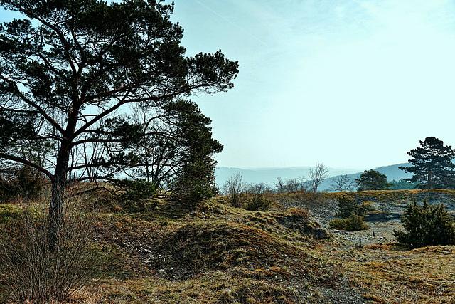 Morgenstimmung in einem Naturschutzgebiet - Morning Mood in a Nature Reserve