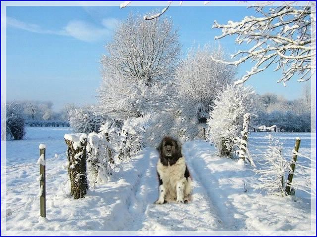 C'est l'hiver ! OUI MAIS.....