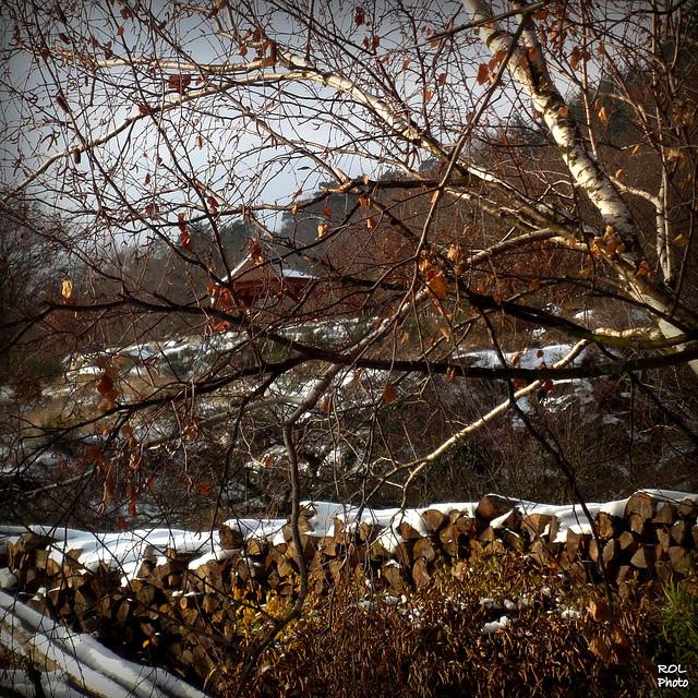 Petit manteau blanc sur mon bois