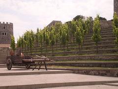 Stairway of vine trees.
