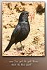 Blackbird & worms