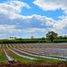 Fields at Derrington