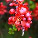 Printempa Prago - parko Vojan floranta
