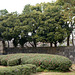 Tokyo, Flower Bushes in the Garden of the Imperial Palace