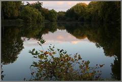 lueur d' automne sur l' etang .....