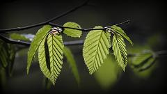Le charme des feuilles