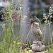 EOS 6D Peter Harriman 09 36 33 7954 GardenLife dpp