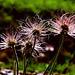Kleine Struwwelpeter | Little tousle-heads