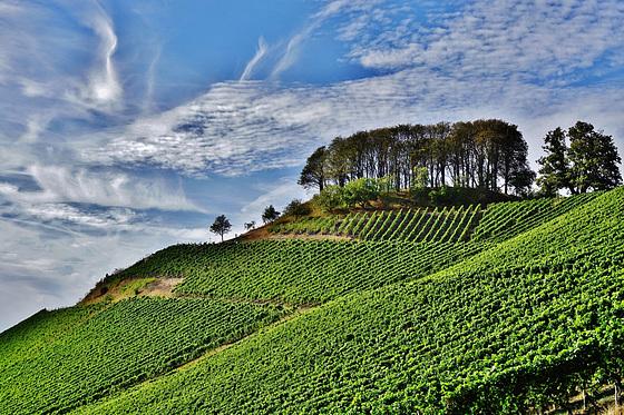 Der Casteller Schlossberg - The castle hill of Castell