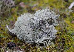 Troll des lichens