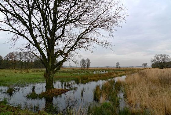 Nederland – Dwingelderveld