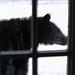 Black Bear on Deck