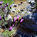 Lavender and mountain stream.