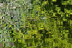Reflexe in grün