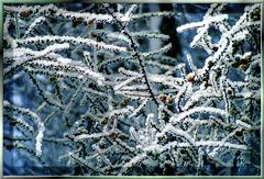 Lärche mit Schnee Kristallen. ©UdoSm ,