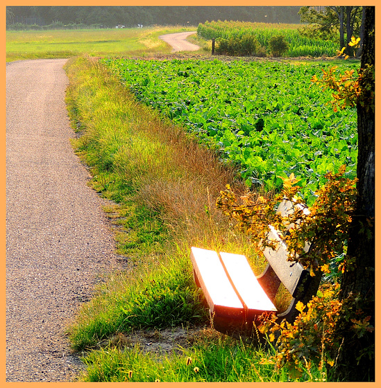 Reflective Seat  (Hbm)