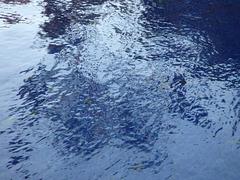 Reflejos del agua