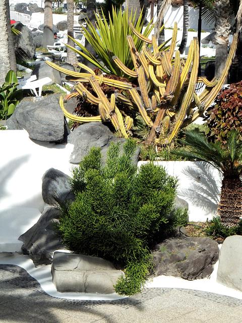Lago Martiánez. Pflanzen. ©UdoSm