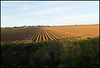 Oxfordshire ploughed field