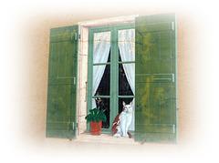 Fenêtre en trompe chat............