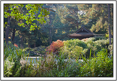Autumn colours of a Japanese garden in Cheshire