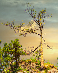 1 (22)..austria tree baum summer