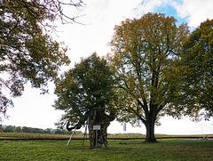 Das Kasberger Linden Naturdenkmal (14 PiP)