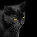 Mein Wildling Nera - My wild cat Nera