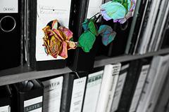 Rose 38/50 : Beamtenträume