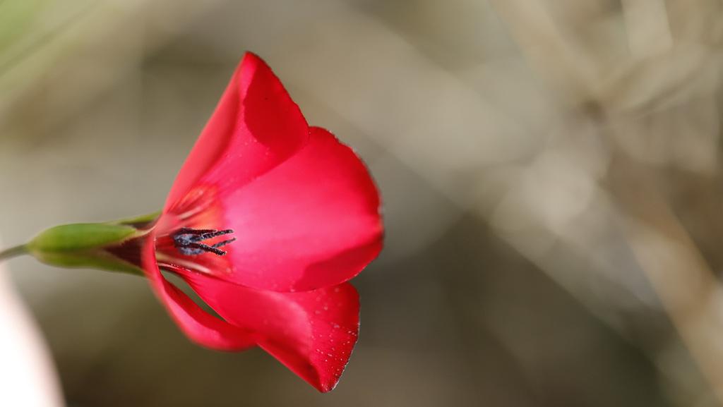 Une fleur par jour.... - Page 11 47576234.10ec9a37.1024