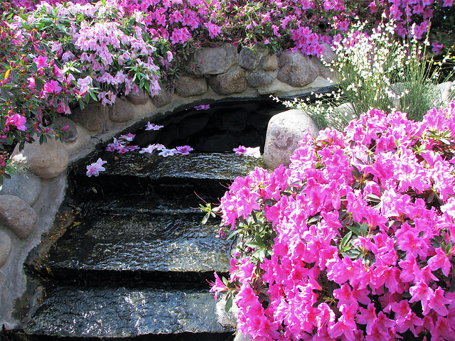 Stairway to Floral Heaven