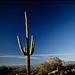 Saguaro National Monument (11)