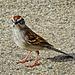 4044651 DxOdL2 · Sparrow