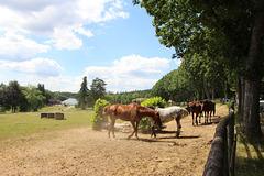 photo du Limousin